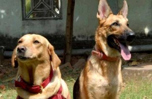 RP_ARV_POLICE_DOGS_10505f