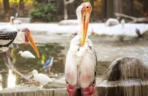 RP_Bird Park, DNA
