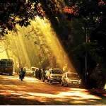 RP_Aarey Road