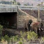 RP_wildlife-crossings-8[3]