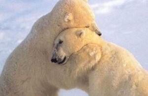 RP_Bear-Hug-720x340