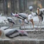RP_Bird Park